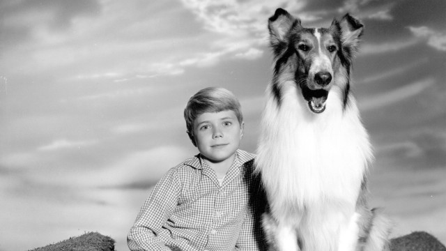 Uitgelicht: Honden in televisieseries