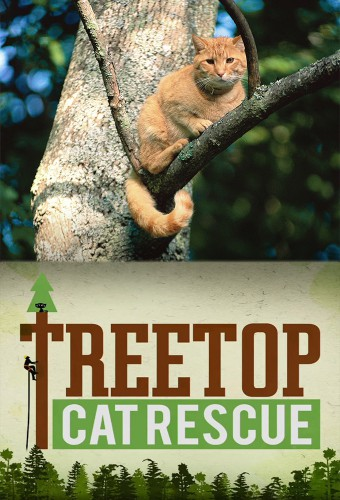 Treetop Cat Rescue Cancelled