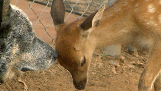 Best Friends Furever With Kel Mitchell Deer Friends Thetvdb Com